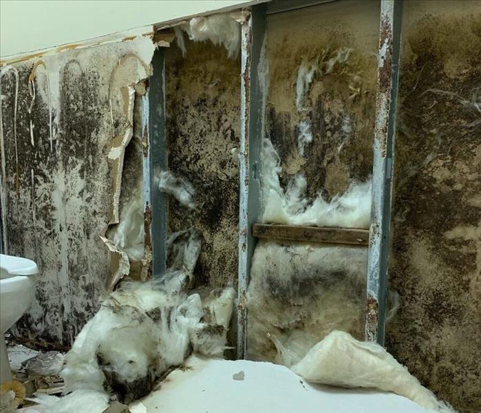 mold covered walls