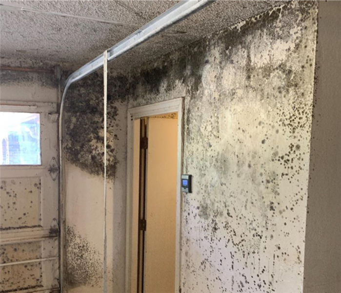 mold growth in a garage